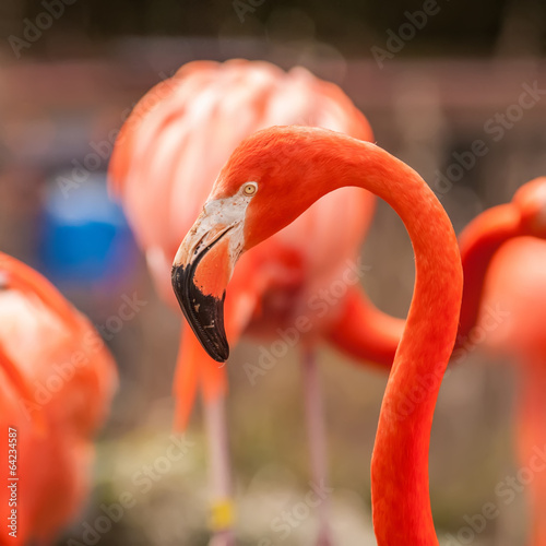 pink flamingo at a zoo in spring © digidreamgrafix
