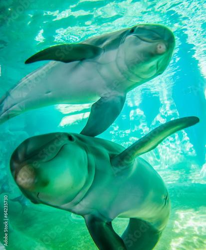 Foto op Aluminium Dolfijn dolphin posing for a camera closeup