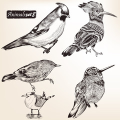 Collection of vector detailed birds