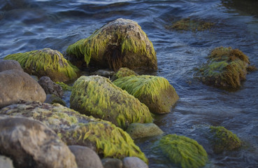 Algae on the boulders.