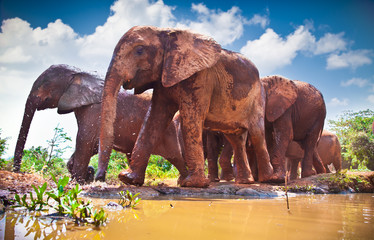 Herd of elephants pass by river in Kenya.