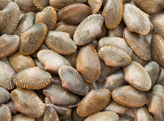 edible clams on belgian fish market