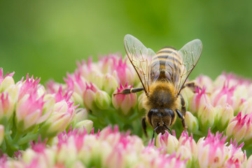 Frühling, Blühte, Sommer, Biene,