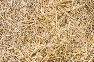Texture hay closeup in color.