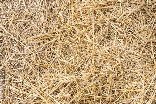 Texture hay closeup in color. - 64243755
