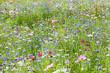 prairie fleurie - 64245567
