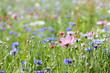 Leinwanddruck Bild - prairie fleurie