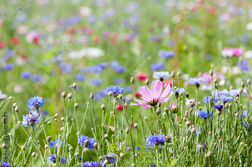 Leinwanddruck Bild prairie fleurie
