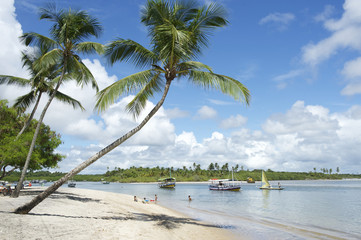Palm Trees Bahia Nordeste Brazilian Beach