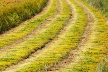 moisson d'un champs de lin