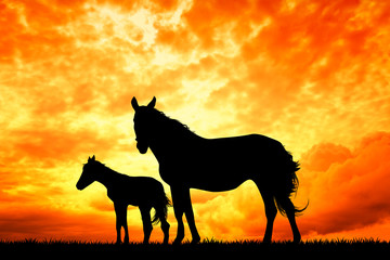 horse and little horse at sunset