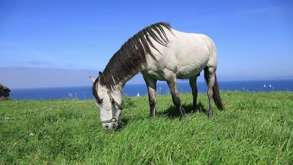 Horse alone on a lawn eating grass