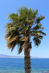 Palm and Strait of Messina, South Italy