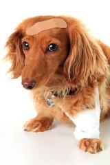Sick puppy dog