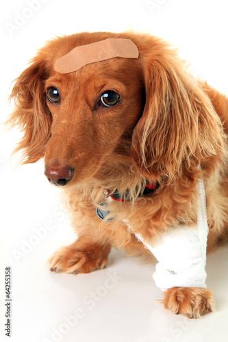 Papiers peints Chien Sick puppy dog