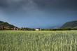 Campo di frumento con temporale