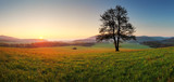 Fototapety Spring landscape with tree and sun