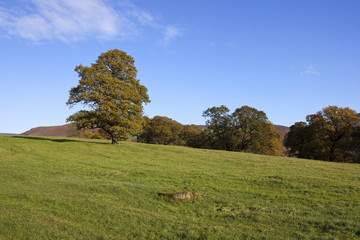 autumn pastures with oaks