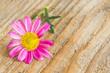 Rosa Blüte auf Holz - Grußkarte