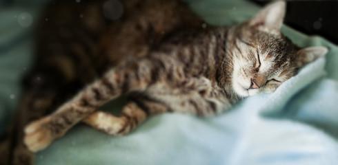 Gatto dormiente