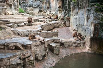 Hamadryas baboons at the Singapore Zoo