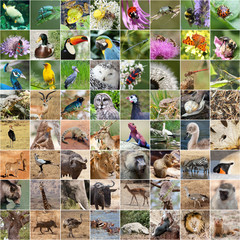 Wildlife collage