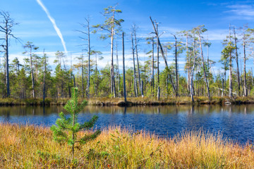 Forest lake in Karelian woods at summer season