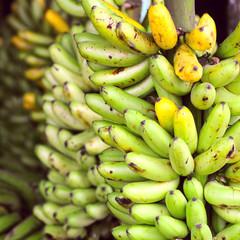 Banana Bunches, Latin America street market, Ecuador, Guayas pro