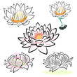 hand drawing water lily, lotus