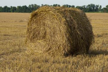 Тюк соломы в поле после сбора урожая