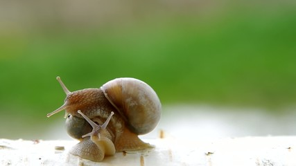 One snail crawling on a second snail