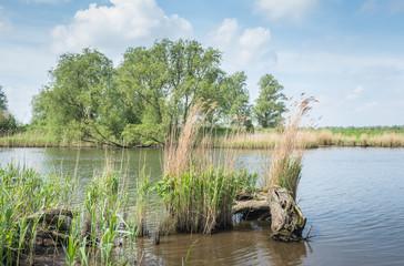 Springtime in a Dutch National Park