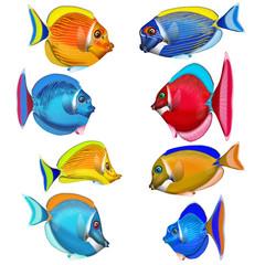 bunte Korallenfische, fantasie  freigestellt