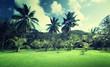 field of grass and coconut palms on Praslin island, Seychelles