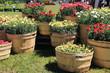 giardinaggio fioritura primaverile esposizione in vasi