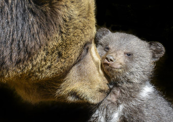 little brown bear and his mother