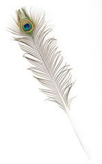 plumas de pavo
