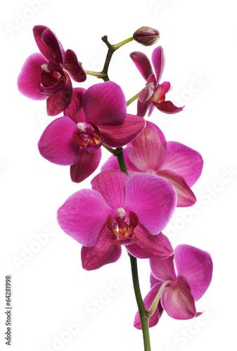 Foto op Plexiglas Orchidee pink orchid