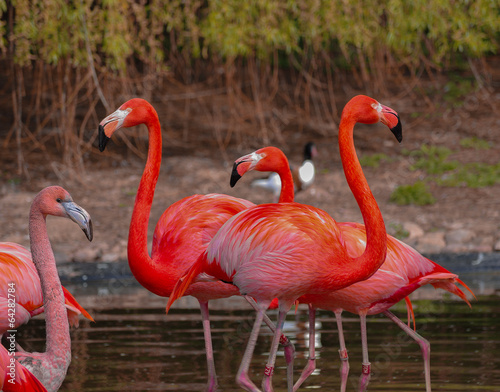 Fotobehang Flamingo Rosy flamingo at the spring lake