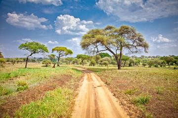 Huge African trees in Tanzania.