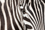 Zebra detail - 64286328