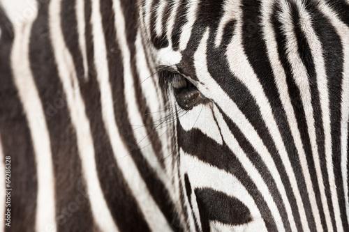 abstrakcje-zebra