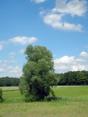 Baum auf Wiesen