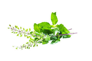 Holy basil or tulsi leaves