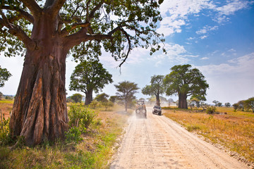 Huge African trees and safari jeeps in Tanzania.
