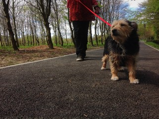 walking the doggy