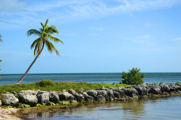 Palm Tree on Tropical Beach, Key West, Florida