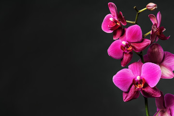 pink orchid on black