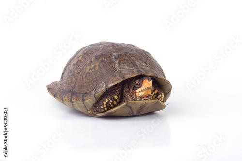 Foto op Plexiglas Schildpad Turtle