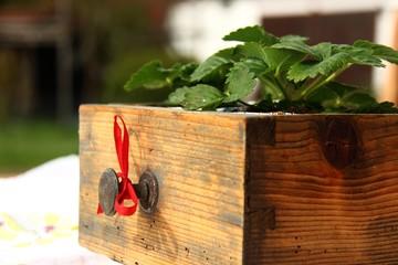 alte schublade mit erdbeeren VI